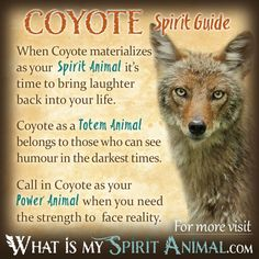 In-depth Coyote Symbolism & Coyote Meanings! Coyote as a Spirit, Totem, & Power Animal. Plus, Coyote in Celtic & Native American Symbols & Coyote Dreams! Spirit Animal Quiz, Spirit Animal Totem, Animal Spirit Guides, Your Spirit Animal, Coyote Symbolism, Animal Symbolism, Coyote Animal, Animal Espiritual, Animal Meanings