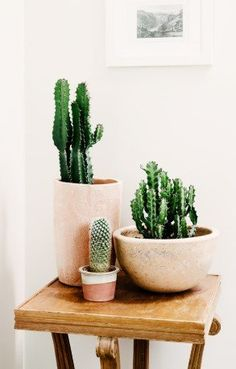 Small cactus is an amazing idea to decorate your house. In our today post we have for you 22 great DIY ideas with mini cactus for interior decoration. Cactus Planta, Cactus Y Suculentas, Indoor Garden, Indoor Plants, Air Plants, Indoor Cactus, Indoor Trees, Green Plants, Palette Pastel