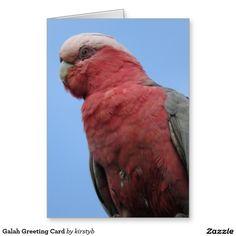 Galah Greeting Card