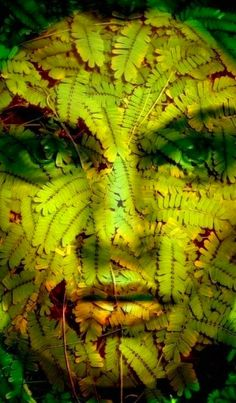 The Green Face of Mother Nature.