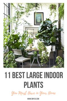House Plants // GREENERY ~ Transform your home into a paradise with these large indoor plants. Indoor Tropical Plants, Large Indoor Plants, Indoor Trees, Outdoor Plants, House Plants Decor, Plant Decor, Amazing Gardens, Beautiful Gardens, Umbrella Tree