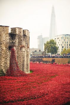 Red ceramic poppies fill the moat of the Tower of London to commemorate every British or Commonwealth soldier killed during the war.