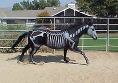 I find this incredible. Would love to do this with one of my horses for. Costume contest