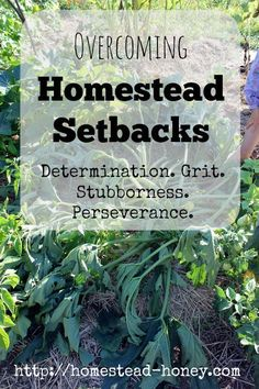 Homestead bloggers share their real-life wisdom on how to handle homestead setbacks, or what to do when the going gets rough!