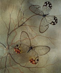 """pearl-nautilus: """" Mariposas by Jo Whaley Fine Art Color Photographs of Insects, blending Natural History with Environmental concerns. Butterfly Effect, Butterfly Kisses, Butterfly Art, Art Papillon, Butterfly Photos, Beautiful Butterflies, Amazing Art, Awesome, Dragons"""