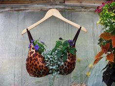 bra planter.... interesting :) LOL!
