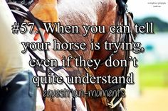 When you can tell your horse is trying even if they don't quite understand.