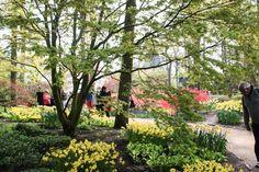 Lust auf den Japanischen Garten im Keukenhof?  ... #keukenhof #holland #tulpen #japanischergarten