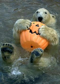 - love polar bears