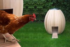 Unique chicken coop
