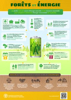 Forests are nature's powerhouse and source of renewable energy Uses Of Solar Energy, Solar Energy Panels, Solar Energy System, Environment Topic, Solar Energy Information, Solar Energy Companies, Technology Transfer, Energy Supply, Sustainable City