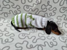 Dinosaur knitted sweater for dachshund or small dog, dinosaur dog sweater, dino sweater | dachshundknit Dachshund Clothes, Puppy Clothes, Yorkshire Terrier, Sweater Outfits, Small Dogs, Chihuahua, Your Pet, Puppies, Pets