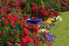 landscape boarder ideas with roses