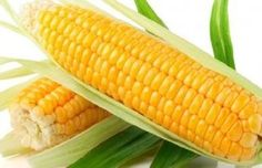 This page is David's Garden Seeds buy corn seeds home page. It is a list of all our pages on buying corn seeds. Garden Seeds, Planting Seeds, Spring Garden, Lawn And Garden, Herb Garden, Corn Health Benefits, Popcorn Seeds, Types Of Farming, Kidney Disease Diet