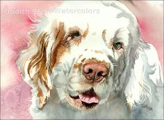 looks just like martina! our clumber spaniel