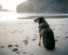 taylormccutchan:  Coastal dog watching his human-buddy surf. This is why I love dogs. and the coast. Mamiya 7, 50mm, Kodak Portra
