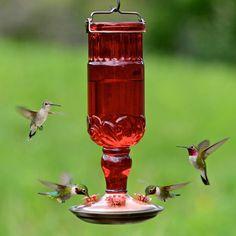 Perky-Pet 24 oz Red Antique Bottle Hummingbird Feeder Image 2 of 7 Red Hummingbird, Glass Hummingbird Feeders, Humming Bird Feeders, Homemade Hummingbird Feeder, Hummingbird Garden, Bee Traps, Bird Types, Antique Glass Bottles, Gardens