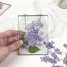I Use Stained Glass And Pressed Flowers To Create Framed Herbariums Pressed Flowers Frame, Pressed Flower Art, Flower Frame, Lilac Flowers, Real Flowers, Dried Flowers, How To Dry Flowers, Dried And Pressed Flowers, Resin Crafts