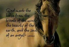 God made the horse from the breath of the wind, the beauty of the earth, soul of an angel...