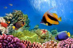 Oferta de viaje a Maldivas Maldivas en el hotel Velassaru 5*Lujo, pensión completa (Vuelo incluido) foto de viaje 9 días - 7 noches Salidas diarias desde Madrid, Barcelona y Bilbao. 7 Noches en Maldivas, en el hotel Velassaru 5* lujo, Pensión completa. Playas de ensueño, islas desiertas, lujo asiático.....¡bienvenido al paraíso! País insular situado en el oceano índico con más de 1000 islas y tan solo  203 están habitadas, clima trópical y relax total.