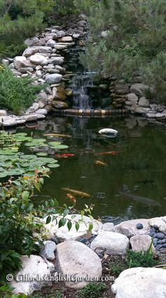 Koi Pond (http://www.alfordsenglishgardens.com/9t2) This 55,000-gallon pond has plenty of room for 25 Koi fish to swim and grow.