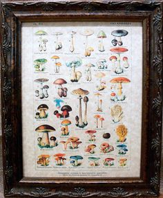 Types of Mushrooms Art in French from 1912 Art Print on Parchment Paper de apageintime en Etsy https://www.etsy.com/es/listing/86241544/types-of-mushrooms-art-in-french-from