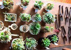 多肉植物の寄せ植えと植物標本が入荷しました : Kitowaの日々