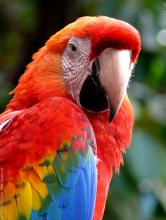 http://www.petcarevision.com/Parrot/macaw.php