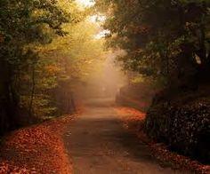 Risultati immagini per bosco autunno