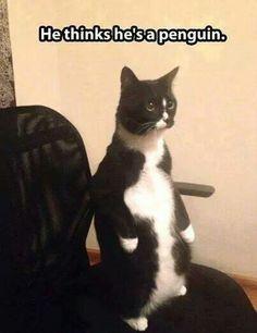 Penguincat