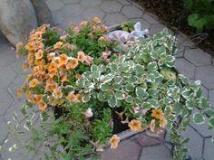 Meine Blumen
