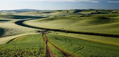 The Palouse is named the most beautiful spot in Idaho and the Tuscany if America. 💛
