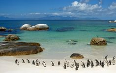 Most people associate penguins with cooler arctic climates, the African penguins seem to be doing fine at the Boulders Beach penguin sanctuary in Cape Town South Africa. Description from thesummerlad.com. I searched for this on bing.com/images