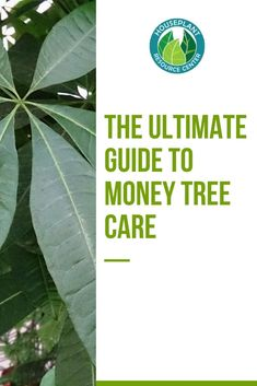 The Ultimate Guide to Money Tree Care - Houseplant Resource Center Money Tree Plant Care, Tree Care, Money Trees, Good Environment, Fiddle Leaf Fig, Spider Plants, Indoor Gardening, Houseplants, Plant Leaves