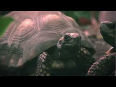 National Aquarium Commercial: Workaholic
