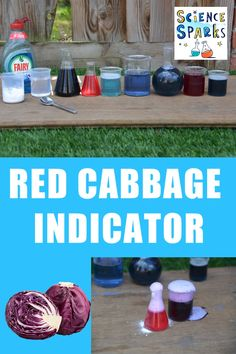 Use red cabbage to make a pH indicator. Brilliant kitchen science and chemistry experiment for kids #chemistryforkids #kitchenscience #redcabbageindicator Chemistry Experiments For Kids, Biology For Kids, Stem Science, Science For Kids, Food Science, Science Resources, Teaching Science, Science Activities, Science Projects