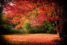 rhode island in fall | Rhode-Island-fall-foliage           #Visit RhodeIsland