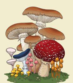 ☽ Glitter Tomb ☾ Mushroom Drawing, Mushroom Art, Plant Illustration, Botanical Illustration, Botanical Drawings, Botanical Prints, Crystal Drawing, Memento Mori, Illustrations