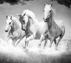 White beauty by Deepak Verma on 500px