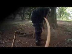 Merip beech investigation - YouTube