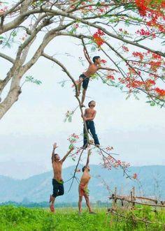 Tree climbers everywhere in Bangladesh