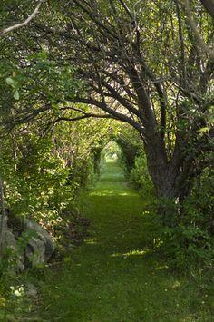 Anne's Way, Thatcher Island, Rockport, Ma