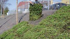 Pflanzenmatten als Böschungsschutz