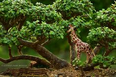 Giraffe in dwarf jade / portulacaria afra succulent bonsai forest by Little Jade Bonsai