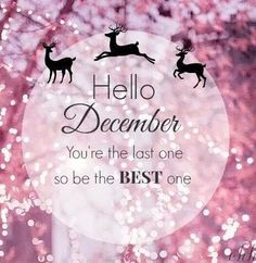 Hello December You Are The Last One So Be The Best december december quotes… Hello December Quotes, Welcome December, Happy December, December Images, Hello December Pictures, November Month, Christmas Quotes, Pink Christmas, Winter Christmas