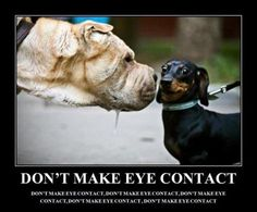 If you have already been caught in their web, our condolences... Confirm why at www.barkingtails.com