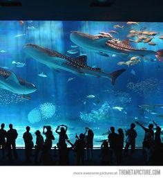 Kuroshio Sea, one of the most beautiful aquariums in the world…