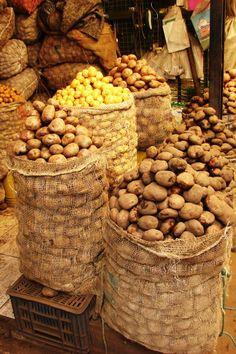 Diversidad de papa cultivada por campesinos en las zonas altas de Colombia.Pastusa, criolla...