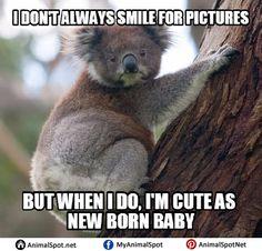 High Koala Meme | Different Types Of Funny Animal Memes ...
