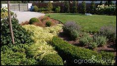 Ogród zmyślony - strona 201 - Forum ogrodnicze - Ogrodowisko